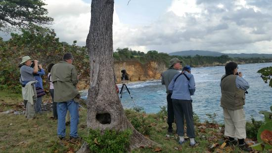 Viewing White-tailed Tropicbirds at Hector's River - Picture of
