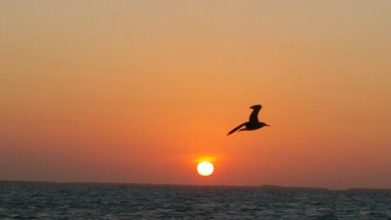 The Landings at Tres Cocos: Sunset Cruise Ambergris Caye Belize
