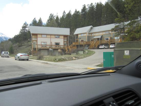 Creekside Accommodation