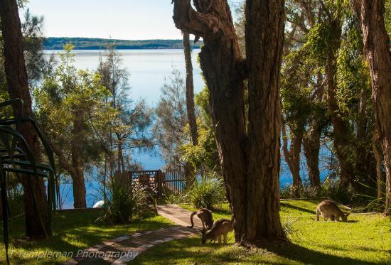 Eumarella Shores Noosa Lake Retreat: Roos