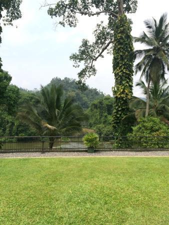 Kithulgala Rest House: Backyard