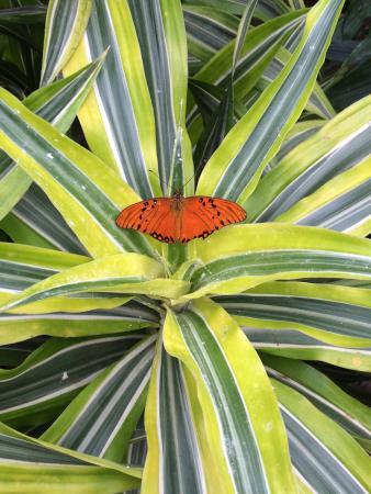 Jardin des Papillons: photo0.jpg