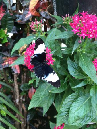 Jardin des Papillons: photo1.jpg