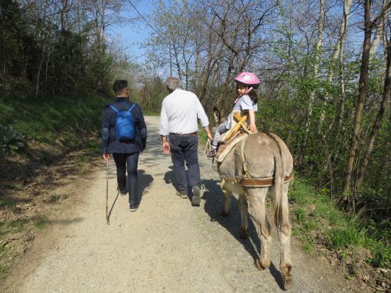 Castelnuovo Nigra, Italien: Passeggiata nel bosco