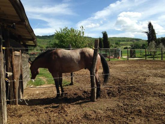 Cavalli foto di la casa di campagna magione tripadvisor for Piani di casa di fattoria di cavalli
