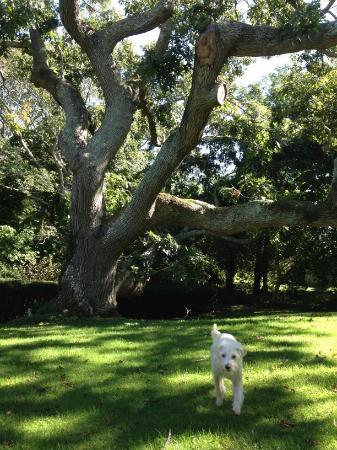 The Doctors House B&B of Martha's Vineyard : dog friendy (and turkeys too)