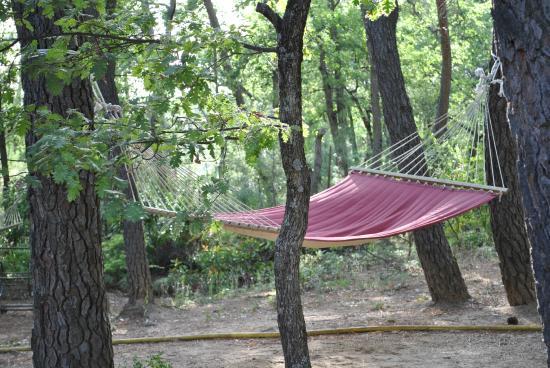 Hotel Des Pins: les hamacs sous les pins