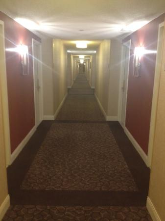 DoubleTree Hotel Boston/Bedford Glen: Hallway view