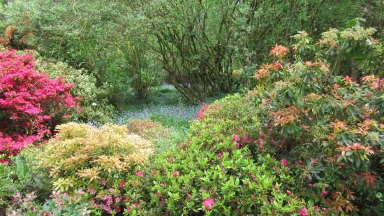 Ramster Gardens: Bluebells