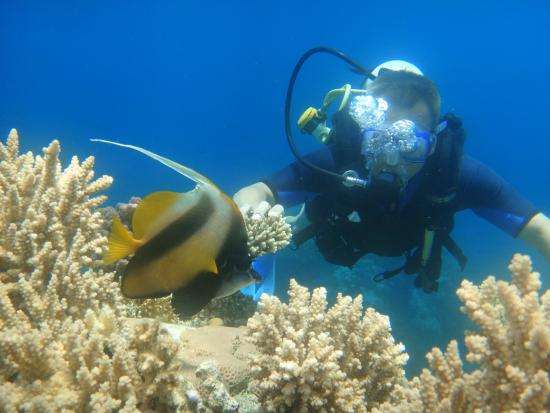 Red Sea Divers Optimist