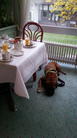 Hotel Alexandersbad: Frühstücken mit Hund