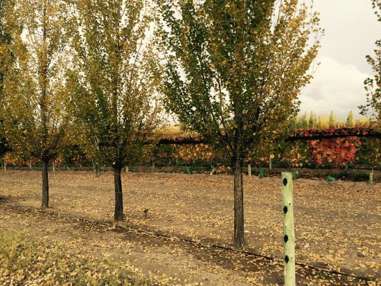Alpasion Lodge: Viñedos en otoño