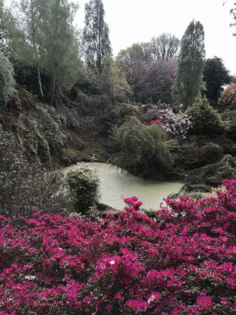 Baginton, UK : Quarry pool and flowers in May