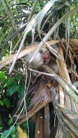 Anywhere Costa Rica - Day Tours: 2 Toed Sloth