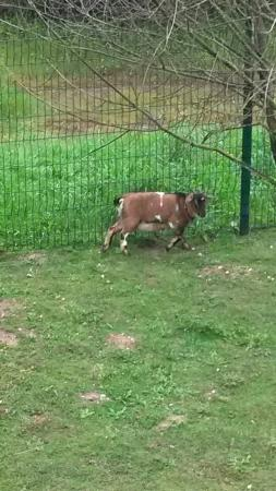 Hotel Salea : Les chèvres qui donnent côté jardin