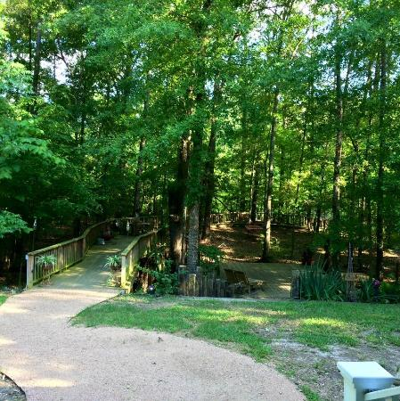 La Paz Bed and Breakfast: The boardwalk that leads down to the Angelina River