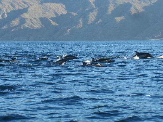 El Sargento, Mexico: Dolphin nearby