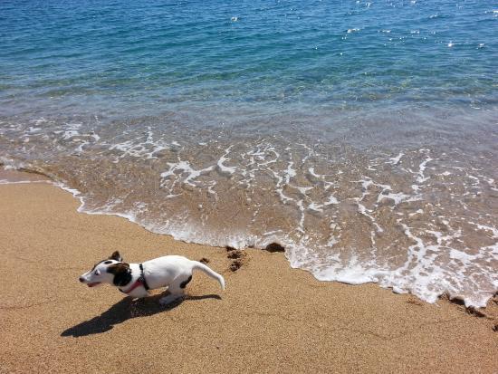 Domus De Janas Beach Resort: splendido mare!!!