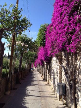 Belvedere di Tragara : Passeggiata fantastica con fiori e piante tipiche capresi