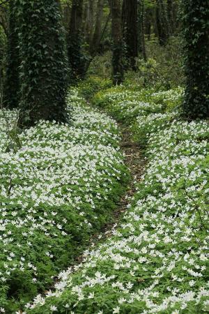 Merlin Woods Park: Wood Anemone Trail