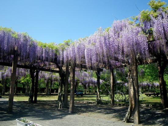 Omishima Fuji Park