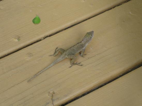 Gecko House: Island Gecko