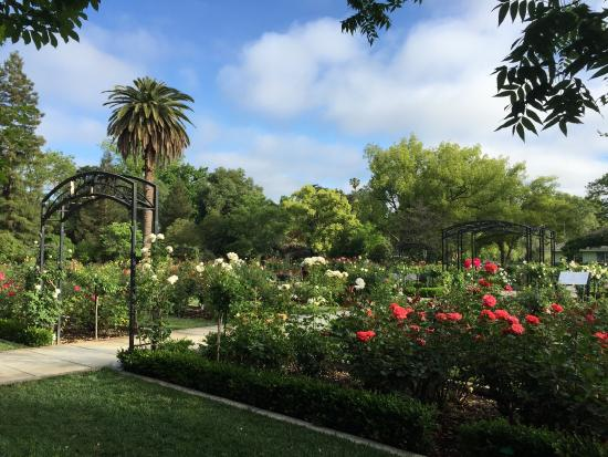 Beautiful Updated Rose Garden Picture Of Mckinley Park