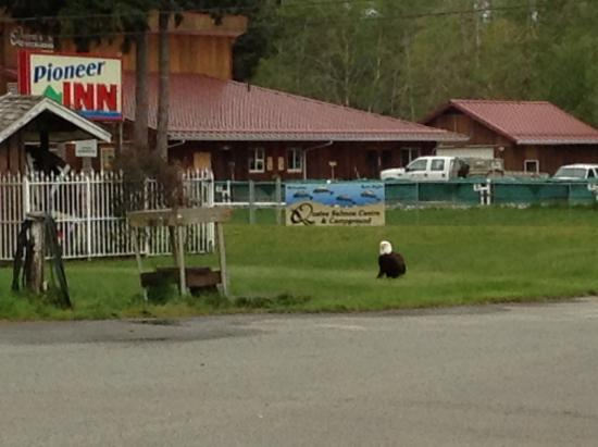 Even the eagles like visiting Pioneer Inn