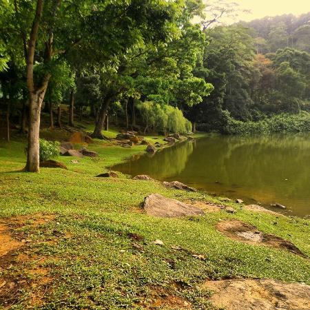 Bukit Batok Nature Park Review