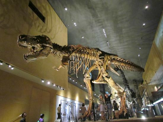 Kitakyushu Museum of Natural History & Human History: 最初に迎えてくれる肉食竜、人と比べるとその大きさが分かる。