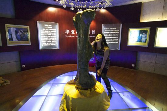 Dinosaur Museum: The most mystical fossil in China. Reportedly.