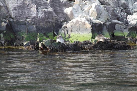 Stavanger, Norway: Robben im Lysefjord