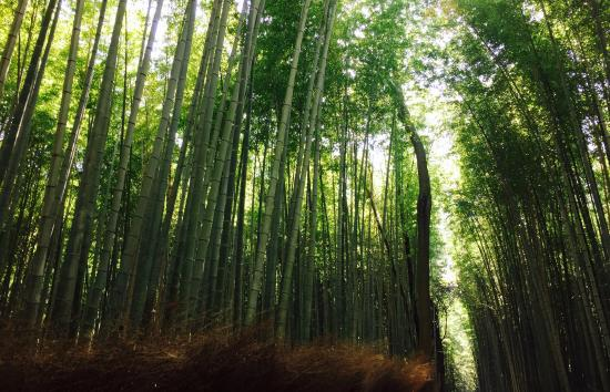 Sagano: Kyoto Bamboo Forest