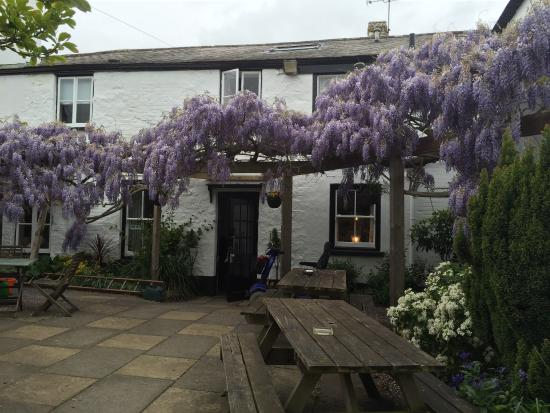 The Wysteria at the back of The Thorverton Arms is over presumed to be over  100 years old. 04 /