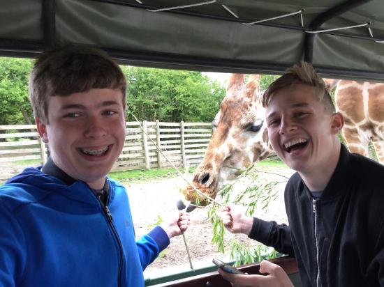 Giraffe Lodge: The boys are in awe of their Giraffe Selfie