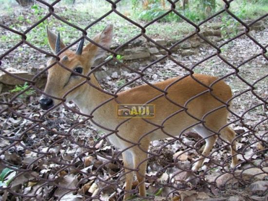 Sambalpur, India: Deer Park, Inside The Park