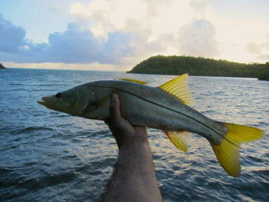nice snook! - picture of antigua fly fishing & light tackle, Reel Combo