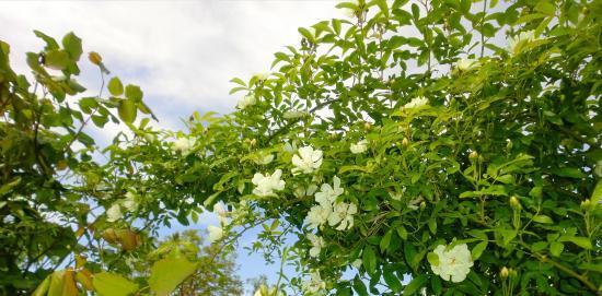 Casa Vacanze Il Piccolo Noce: Il nostro giardino delle rose