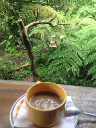 El Descanso: Coffe and hummingbirds!