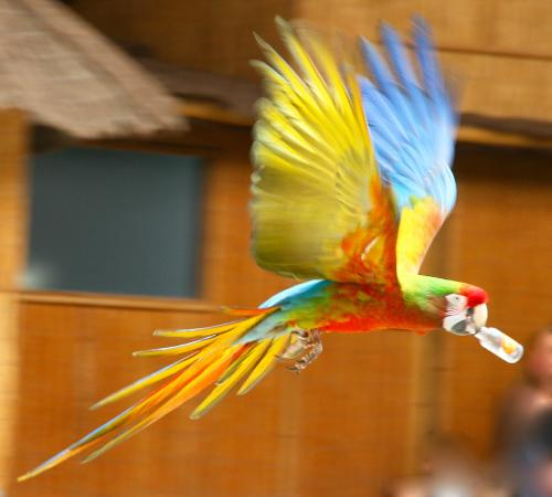 parrot show photo de le monde sauvage aywaille tripadvisor. Black Bedroom Furniture Sets. Home Design Ideas