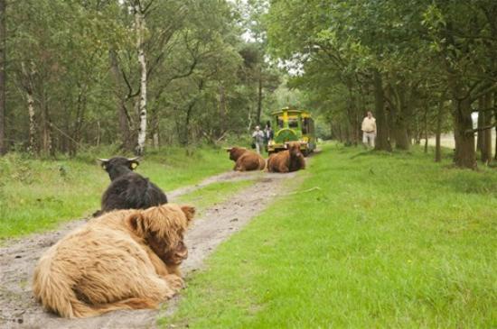 De Moer, เนเธอร์แลนด์: Duinexpres