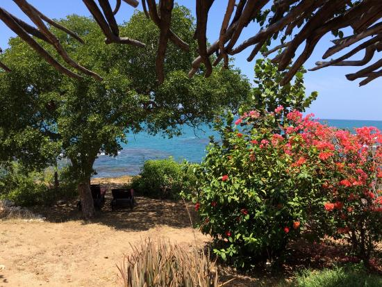 Jakes Hotel Jamaica Reviews