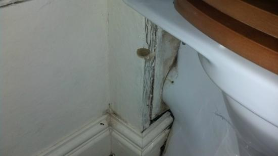 Bull Inn at Streatley: Mould or mushroom growing in the bathroom