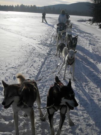 Hotel de Glace Ice Bar: Dogsledding