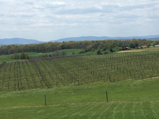 Barren Ridge Vineyards : photo0.jpg