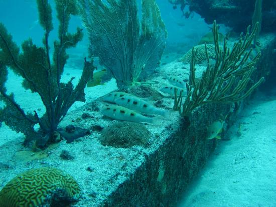 Simpson Bay, St. Maarten/St. Martin: Lined Up