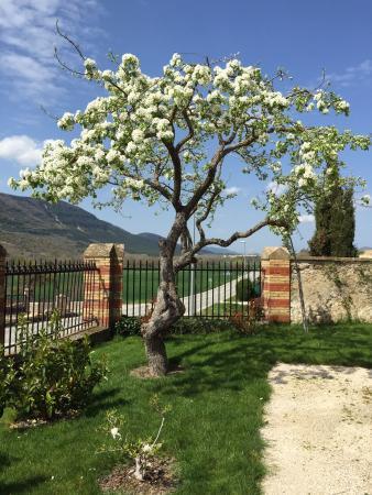 Murillo de Longuida, Spain: El viejo peral, precioso!