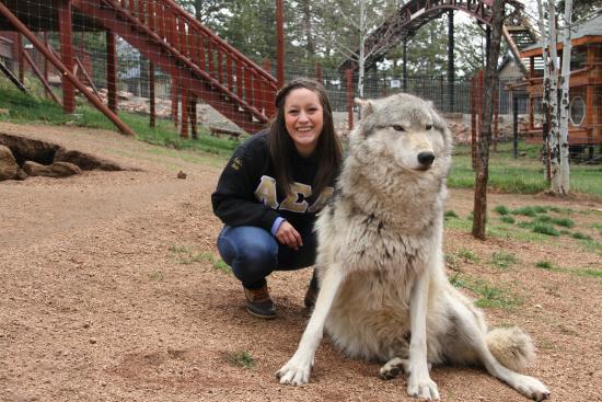 Divide, CO: Keyni the Timberwolf