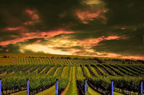 Murdoch James Estate Wines Limited