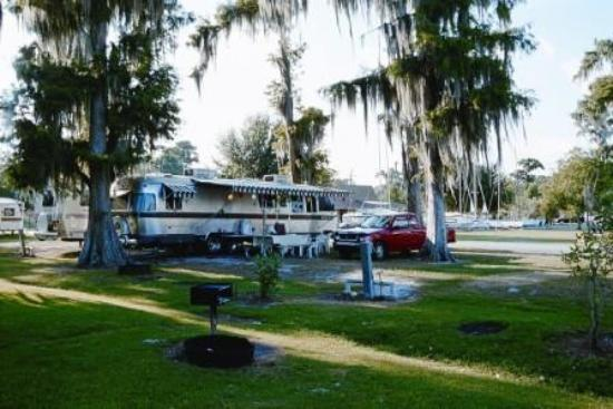 Camping Under The Cypress Trees At Lake End Park Picture